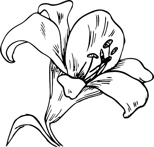 calla lily outline lilly outline clipart best outline lily calla