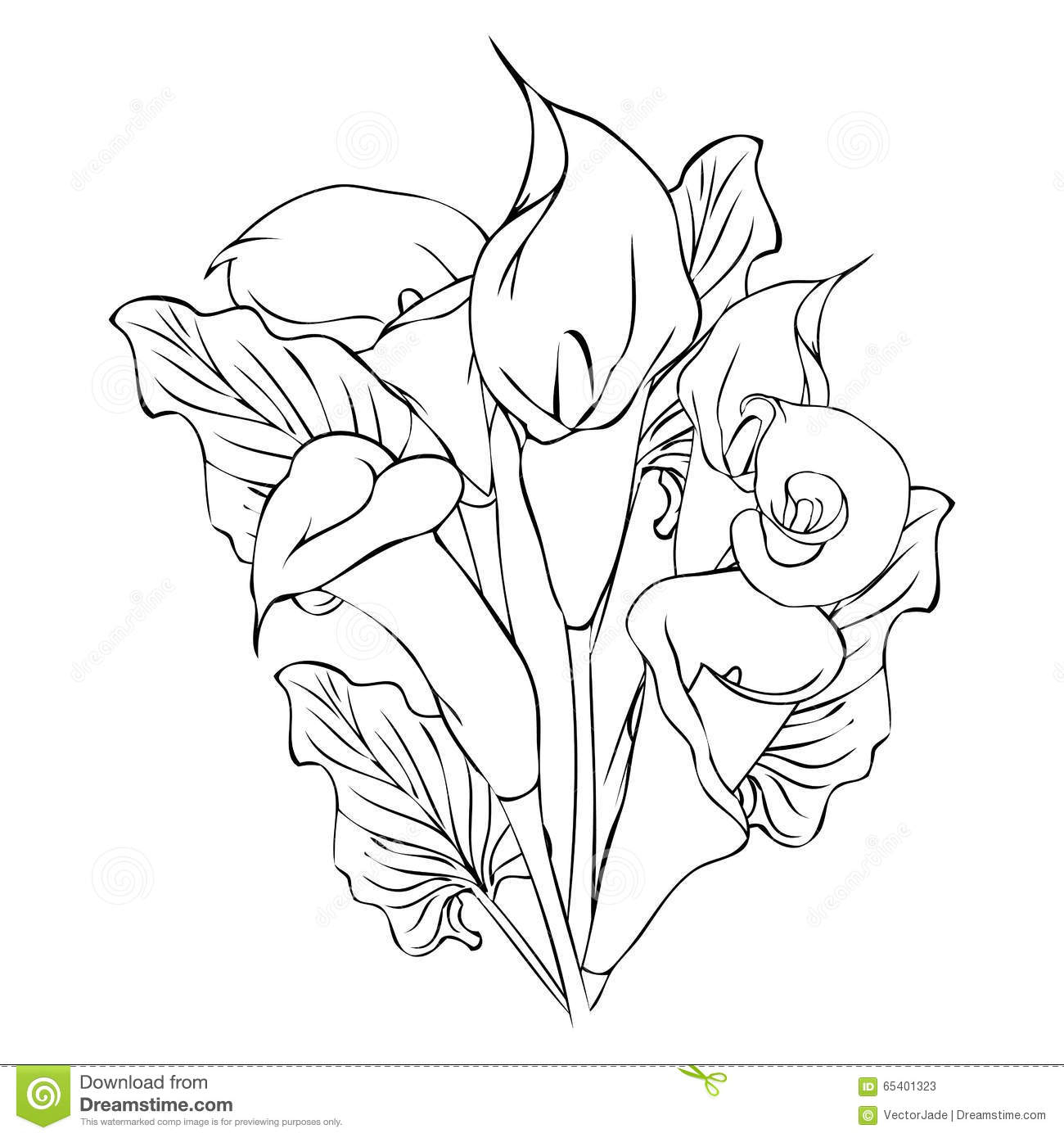 calla lily outline outline flower plant lily calla lilies draw a canna calla outline lily