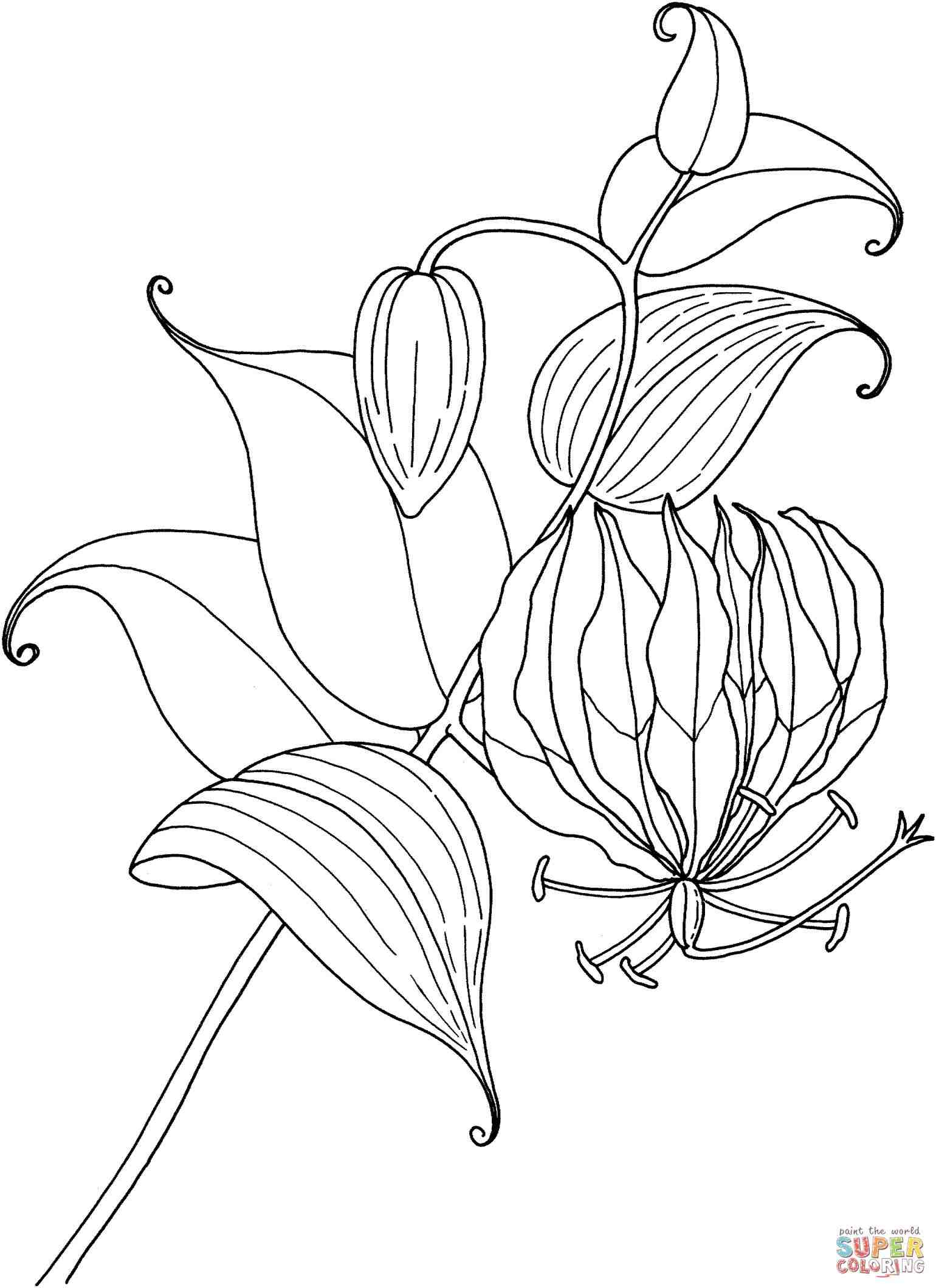 calla lily outline simple calla lily drawing at getdrawings free download calla lily outline