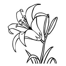 calla lily outline water lily flower drawing at getdrawings free download lily outline calla