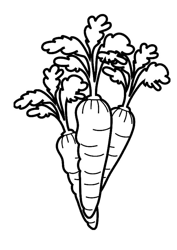 carrot clipart coloring drawing carrot coloring pages drawing carrot coloring clipart carrot coloring