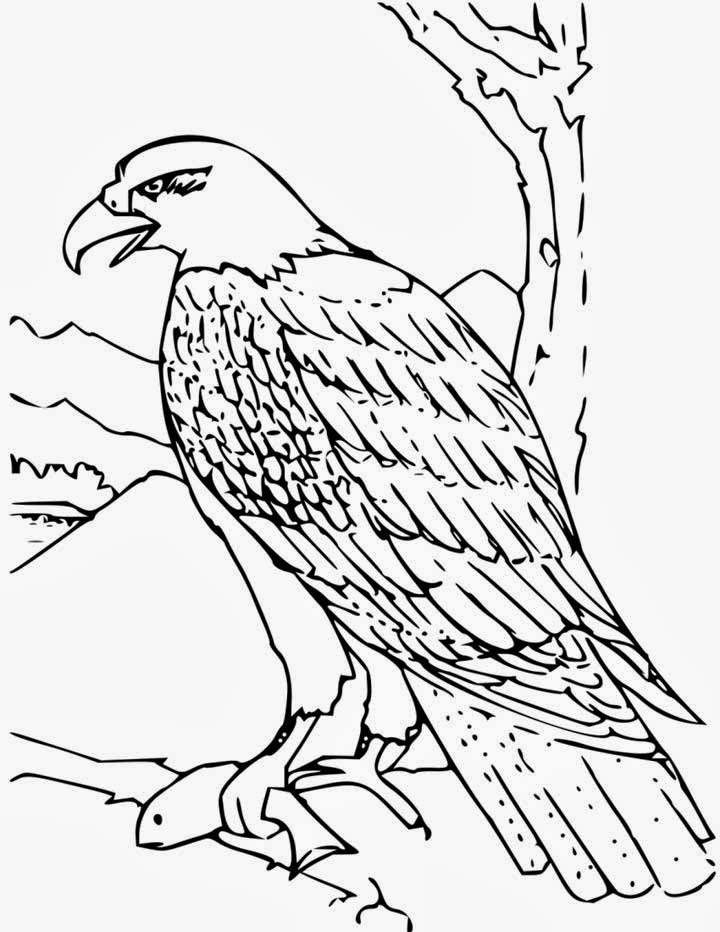 cartoon eagle coloring pages bald eagle coloring pages download and print for free pages eagle cartoon coloring