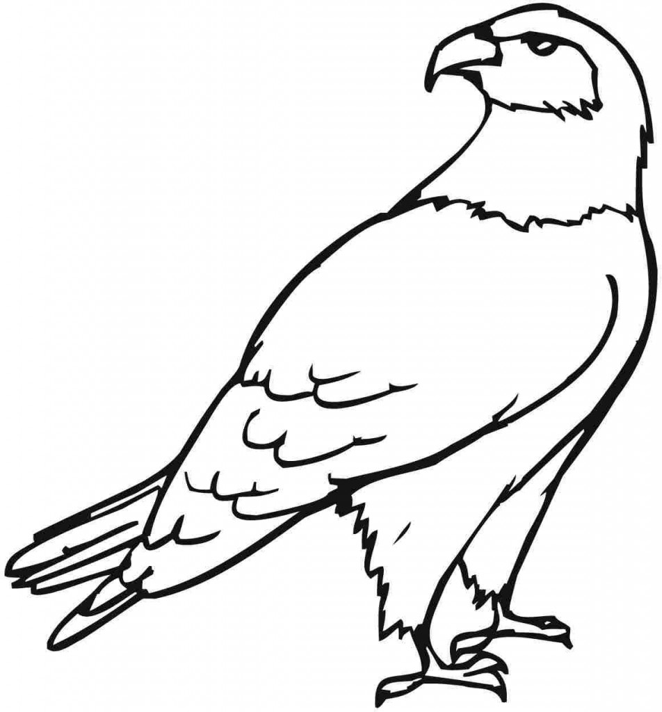 cartoon eagle coloring pages free printable eagle coloring pages for kids cartoon coloring eagle pages