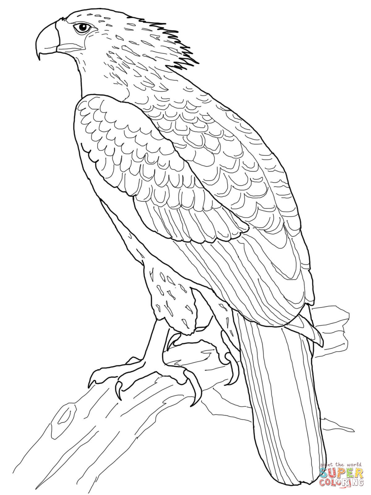 cartoon eagle coloring pages harpy eagle coloring download harpy eagle coloring for coloring cartoon eagle pages