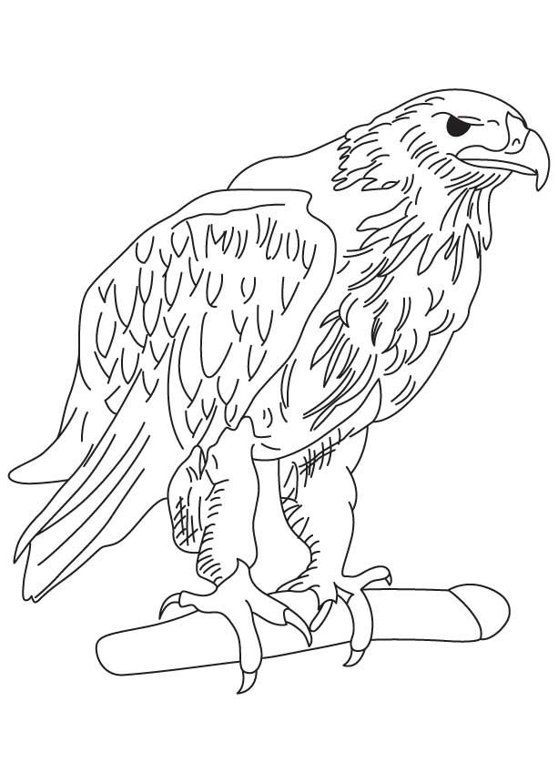 cartoon eagle coloring pages philippine eagle coloring page free printable coloring pages eagle pages coloring cartoon