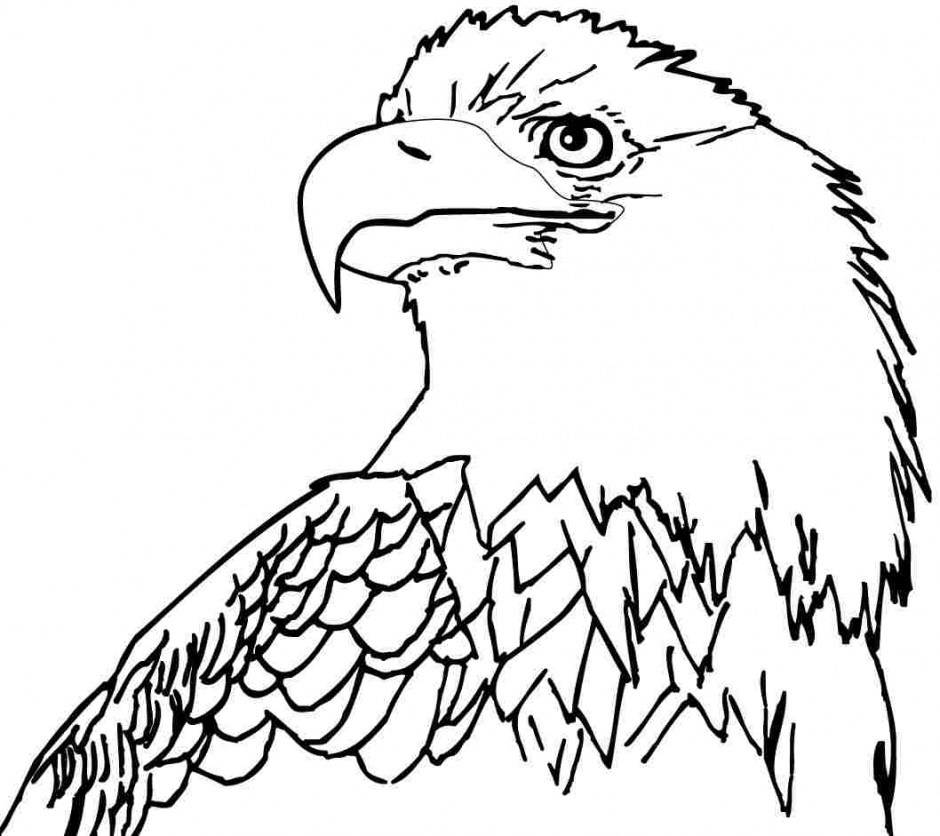 cartoon eagle coloring pages rules of the jungle printable pictures of bald eagle pages cartoon coloring eagle