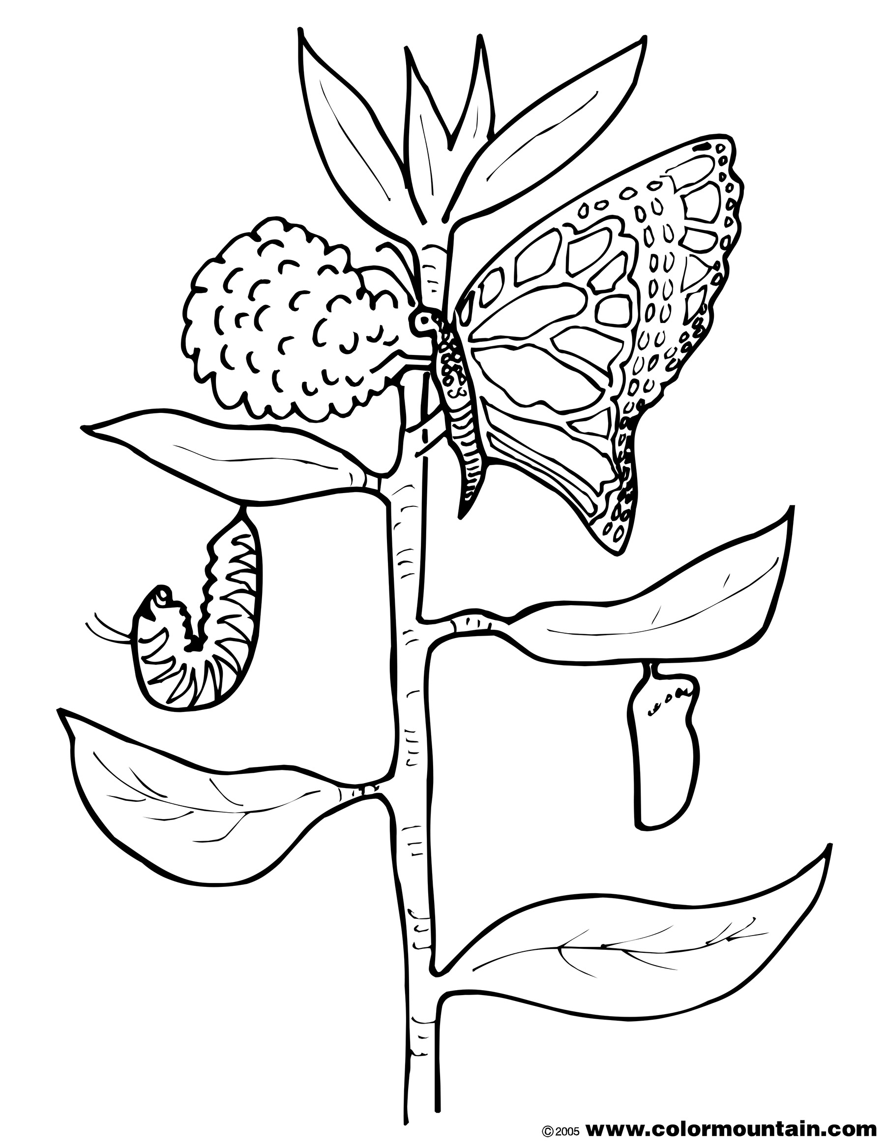 caterpillar to butterfly coloring page butterfly and caterpillar coloring page create a coloring butterfly to page caterpillar