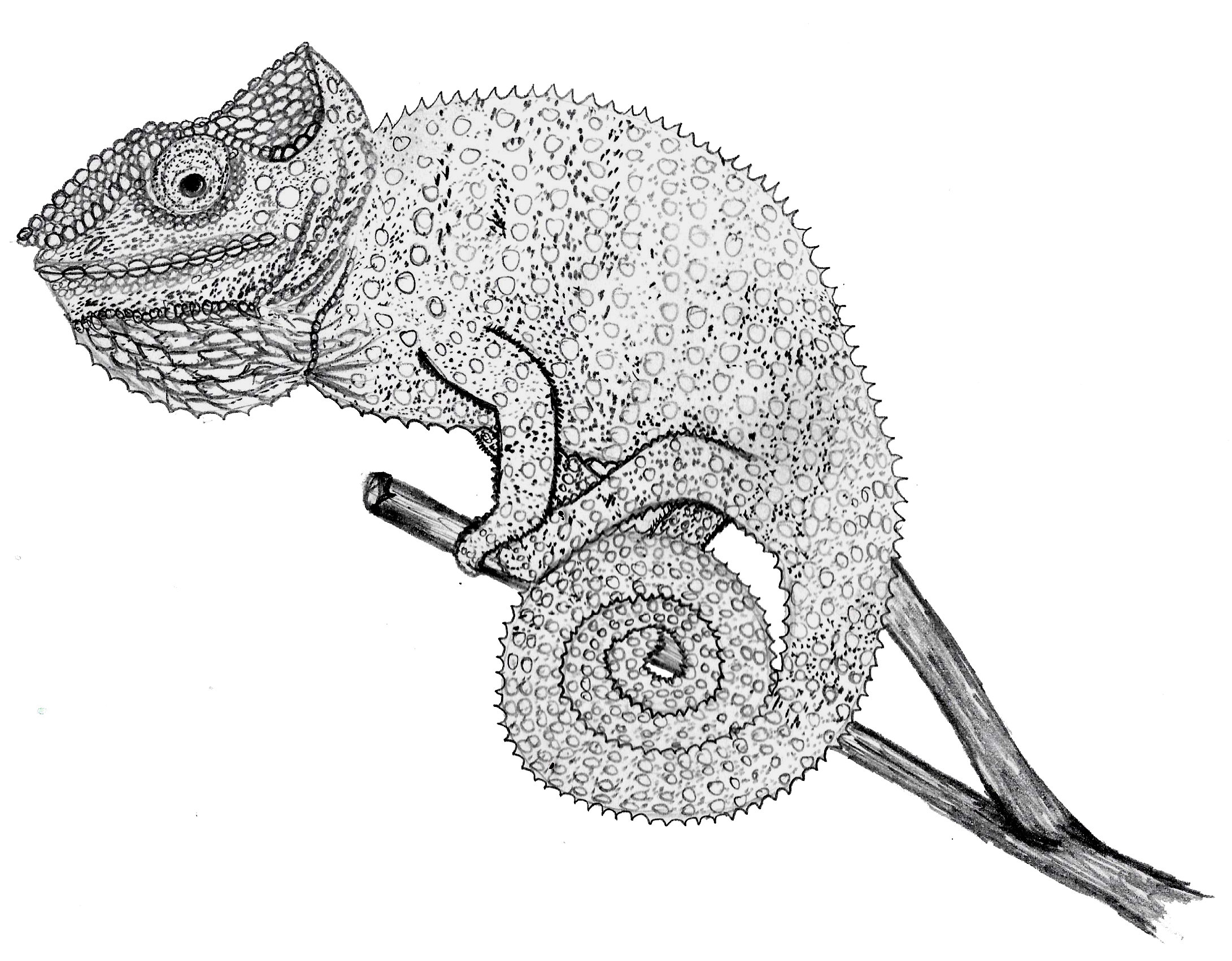 chameleon drawing chameleon geometric drawing size a4 printable download drawing chameleon