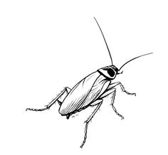 cockroach drawing cockroach drawing at getdrawings free download cockroach drawing