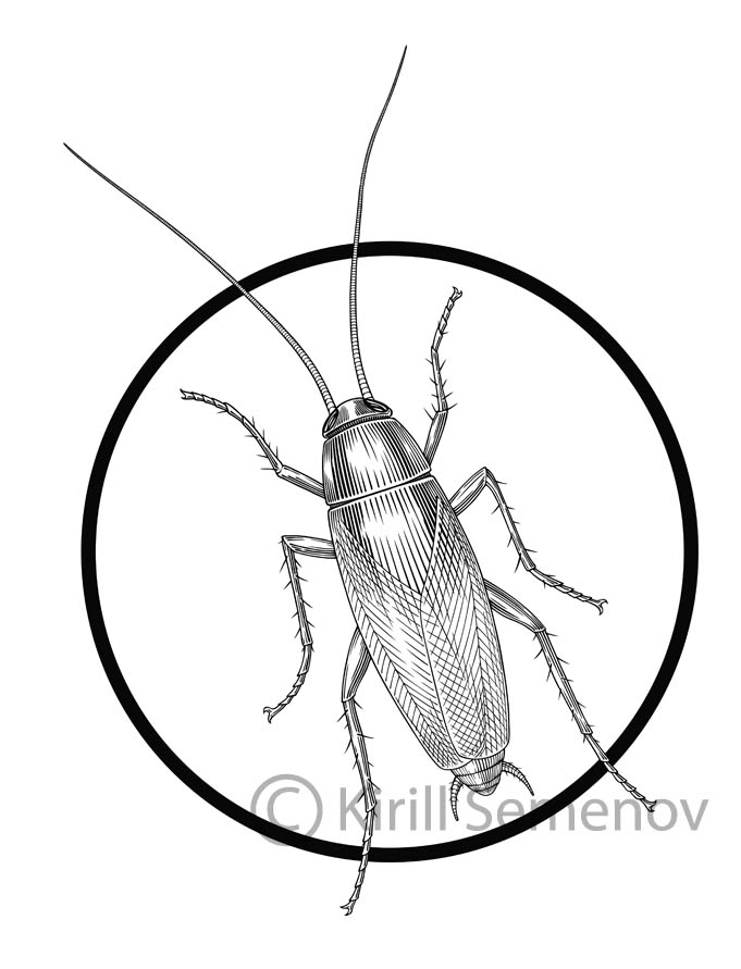 cockroach drawing cockroach drawing at getdrawings free download drawing cockroach