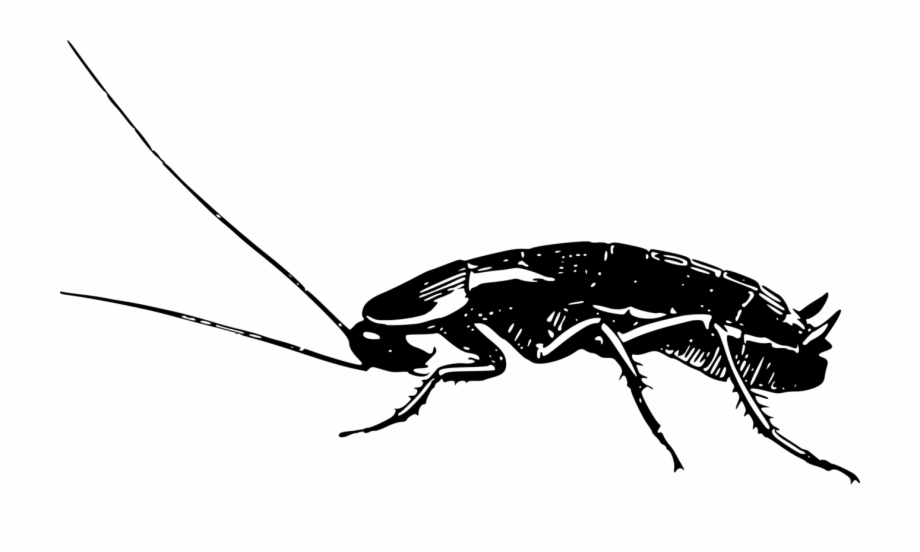 cockroach drawing cockroach drawing carinewbi cockroach drawing