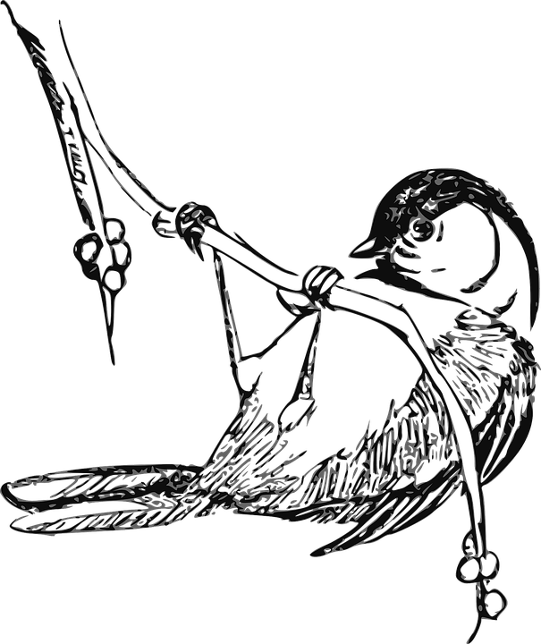 coloring bird png bird coloring pages cswd bird png coloring