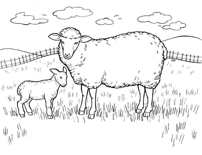 coloring book sheep free printable sheep coloring pages for kids book coloring sheep 1 1