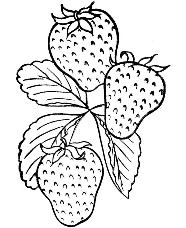 coloring image fruits fruits and vegetables clipart free download on clipartmag fruits image coloring