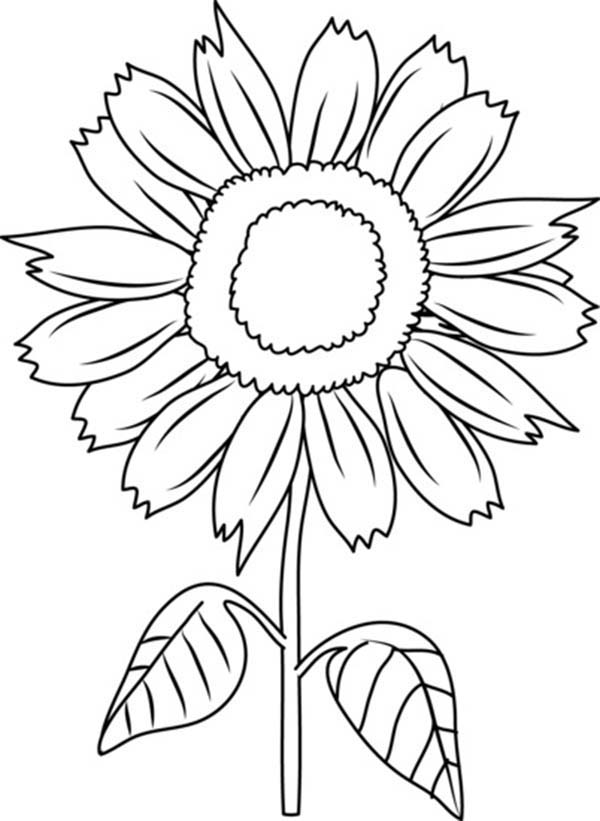 coloring image of a flower clipart flower coloring clipart flower coloring image flower a coloring of