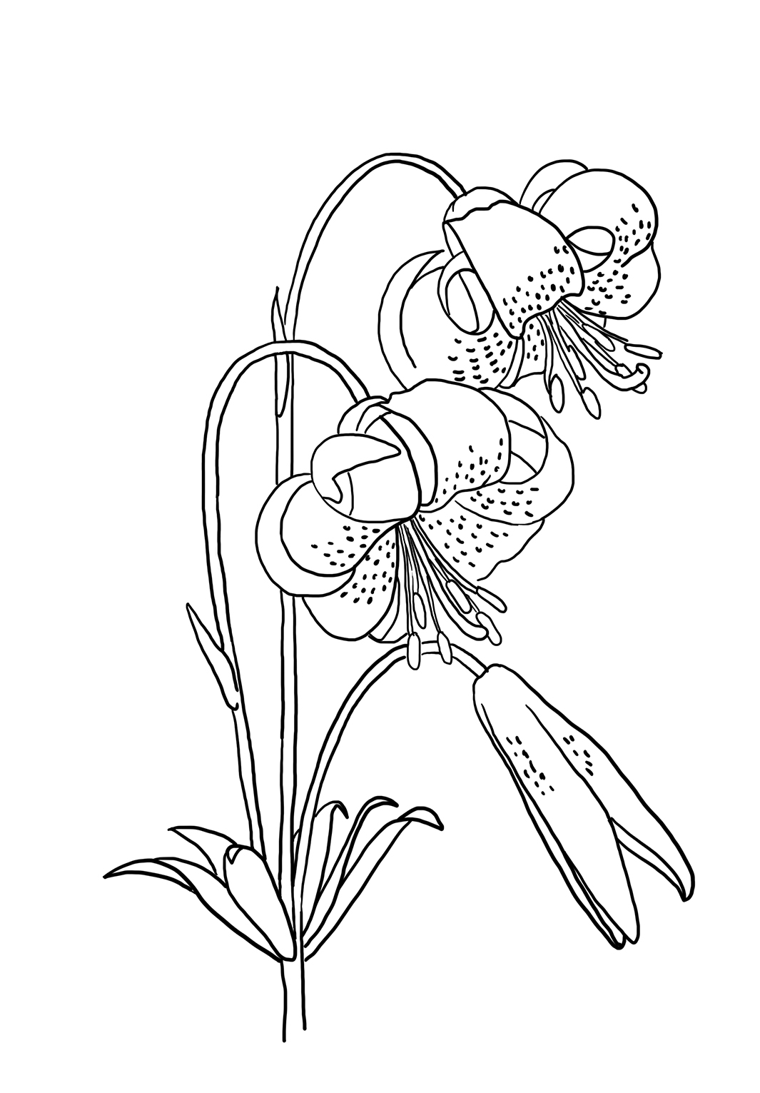 coloring image of a flower flower coloring pages of a flower image coloring