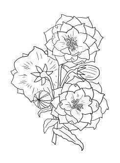coloring image of a flower free printable beautiful flowers coloring page for kids image a flower of coloring