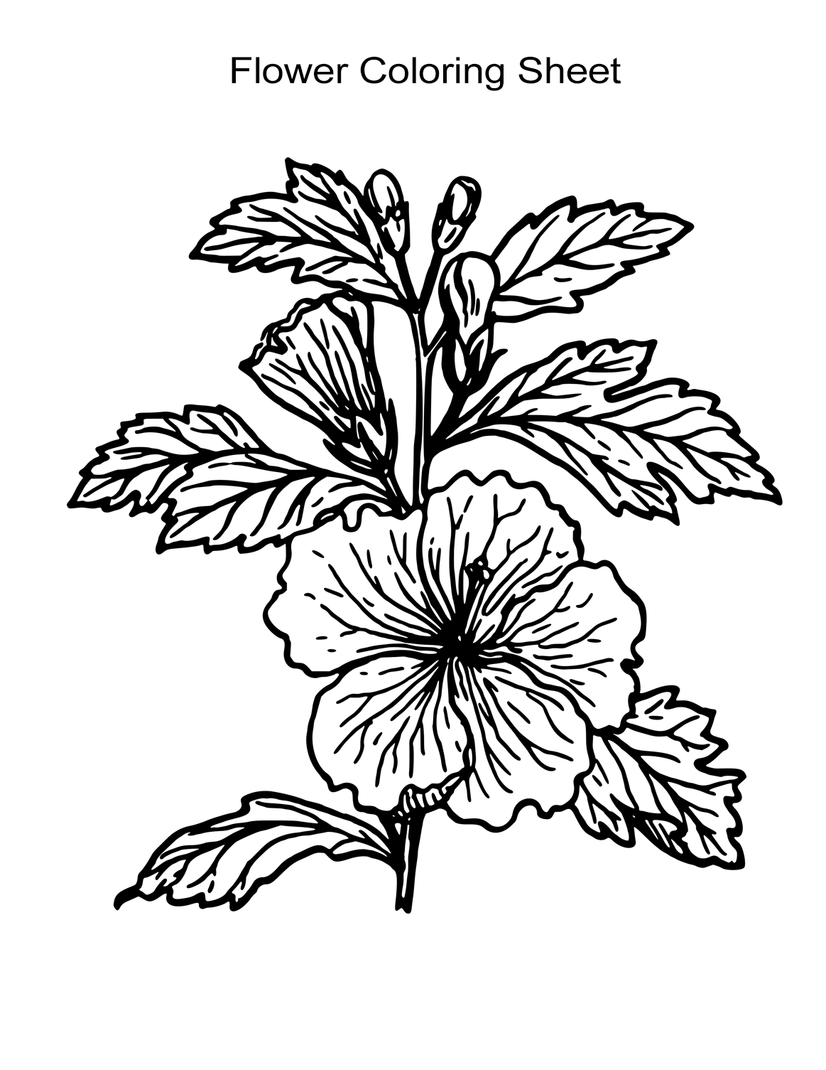 coloring image of a flower poppy flowers coloring pages download and print for free a image of flower coloring