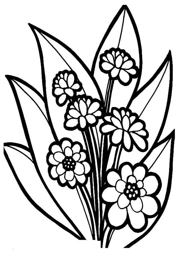 coloring image of a flower sunflowers clipart to color clipground coloring image of flower a