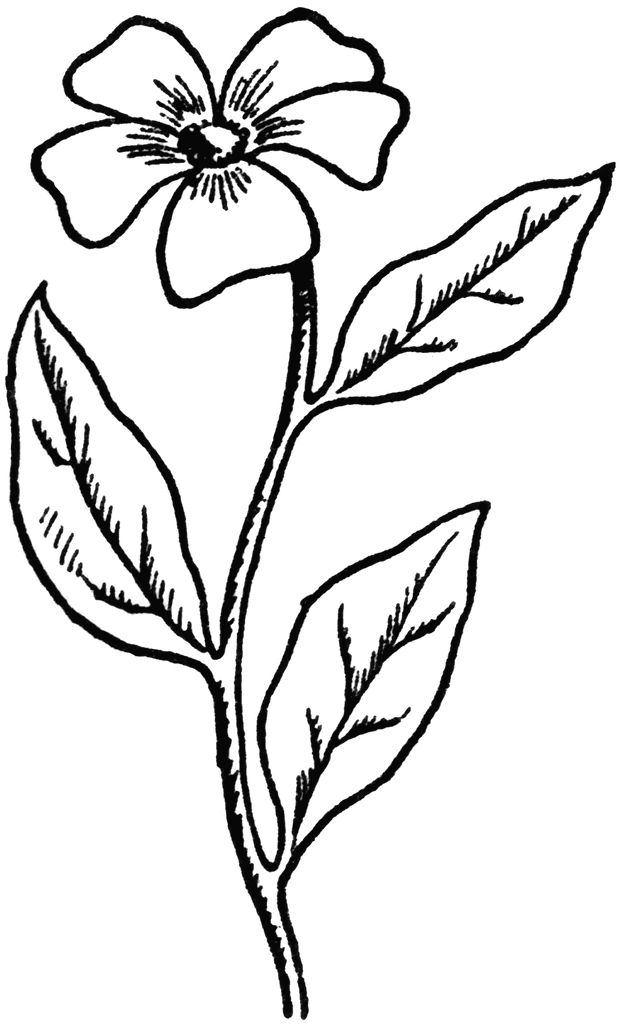 coloring image of a flower sunflowers clipart to color clipground of flower coloring a image