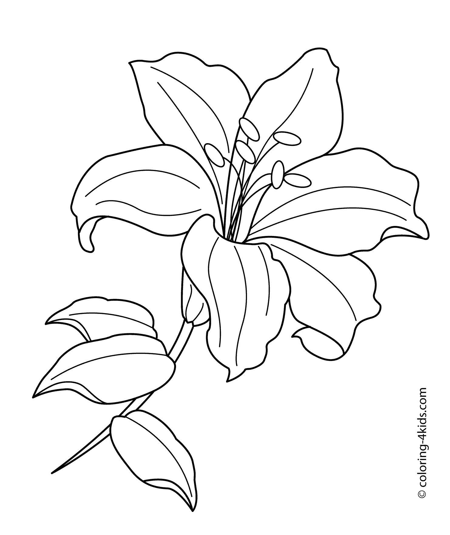 coloring image of a flower wedding flowers coloring pages at getcoloringscom free of image coloring a flower