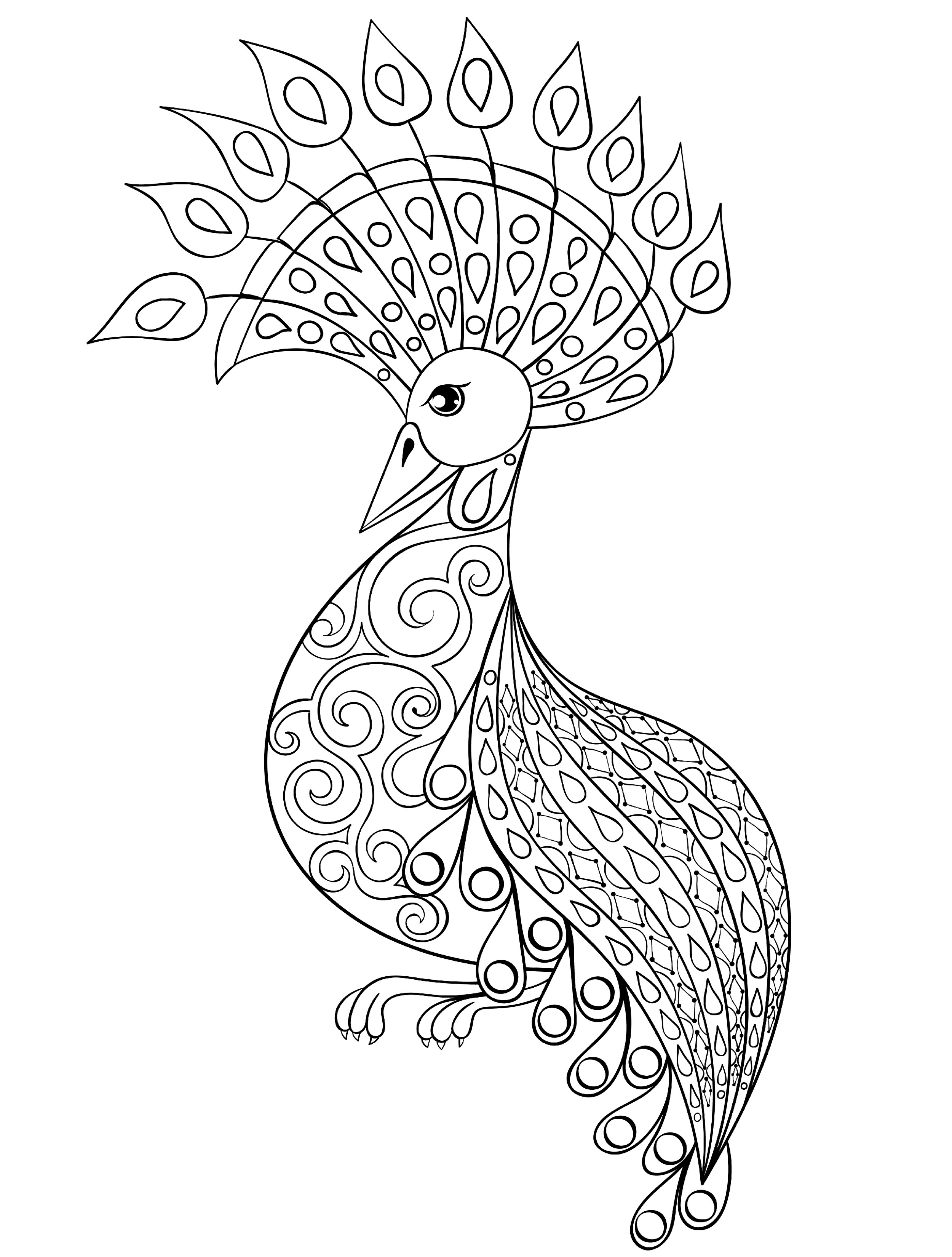 coloring outline image of peacock outline of a peacock drawing at getdrawings free download image coloring of peacock outline