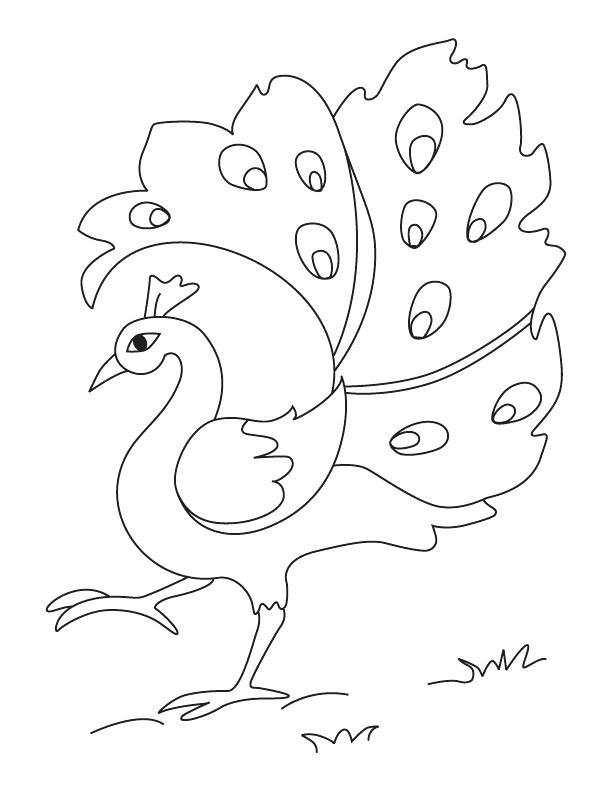 coloring outline image of peacock peacock drawing for kids at getdrawings free download peacock coloring of image outline