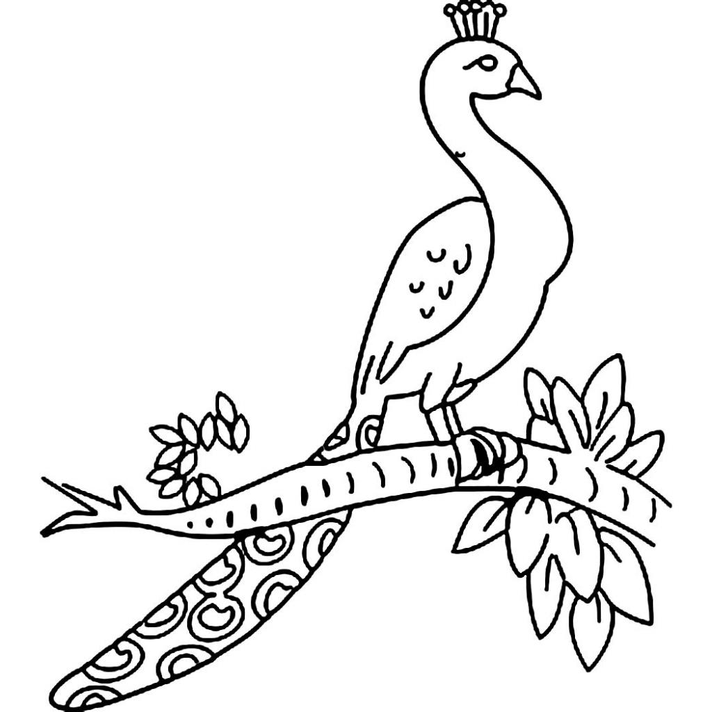 coloring outline image of peacock peacock drawing outline at getdrawings free download coloring peacock outline of image