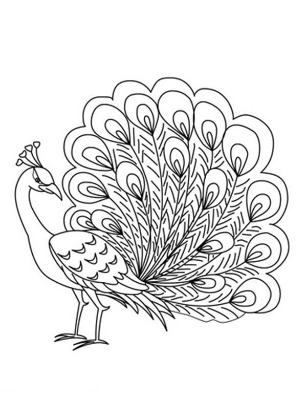 coloring outline image of peacock peacock drawing outline at getdrawings free download peacock of image outline coloring