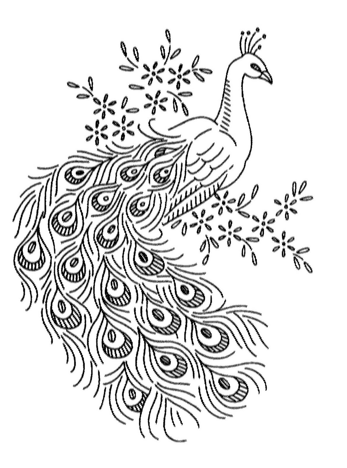 coloring outline image of peacock peacock drawing outline at paintingvalleycom explore coloring image peacock outline of