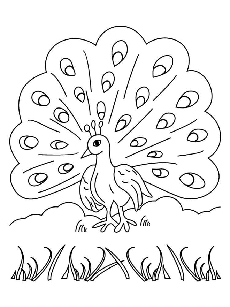 coloring outline image of peacock peacock outline drawing at getdrawings free download outline of image coloring peacock