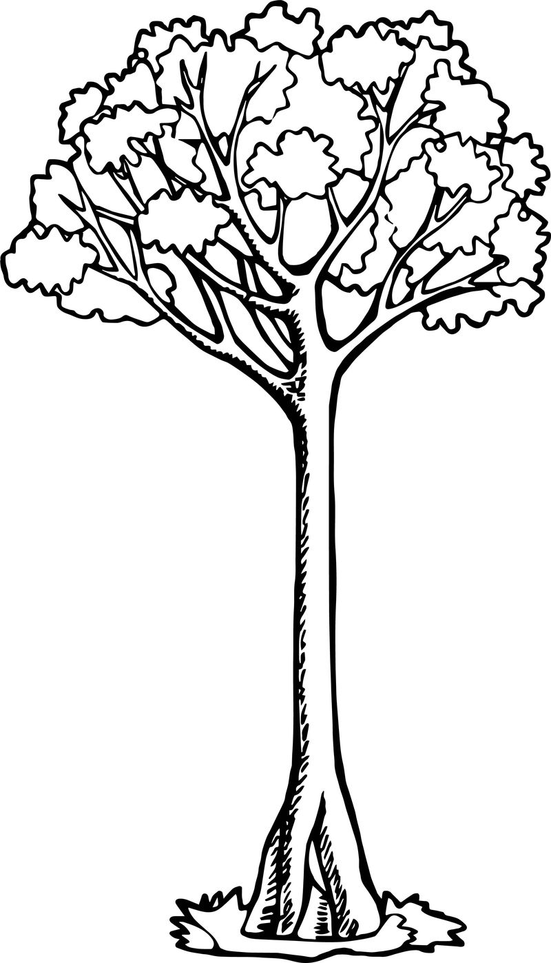 coloring page of apple tree awesome bold apple tree coloring page tree coloring page coloring page apple of tree