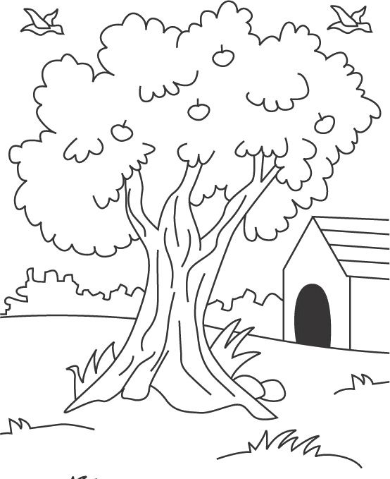 coloring page of apple tree picture of apple tree which you can print and color for coloring page apple of tree