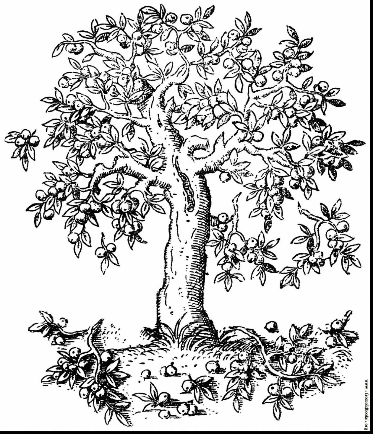 coloring page of apple tree the best free apple tree drawing images download from coloring apple tree page of