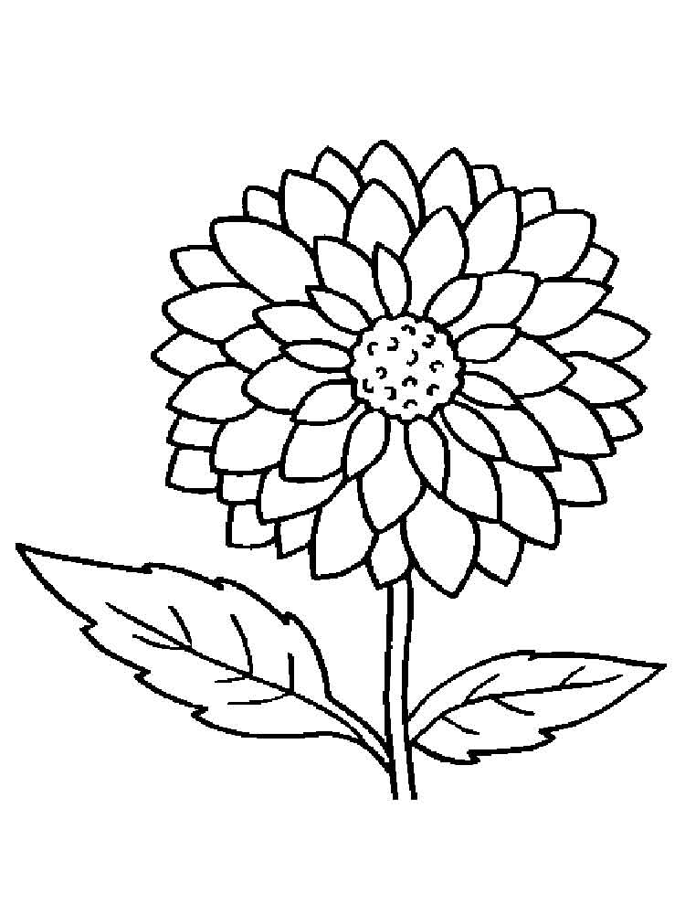 coloring pages flowers dahlia flower coloring pages download and print dahlia pages coloring flowers