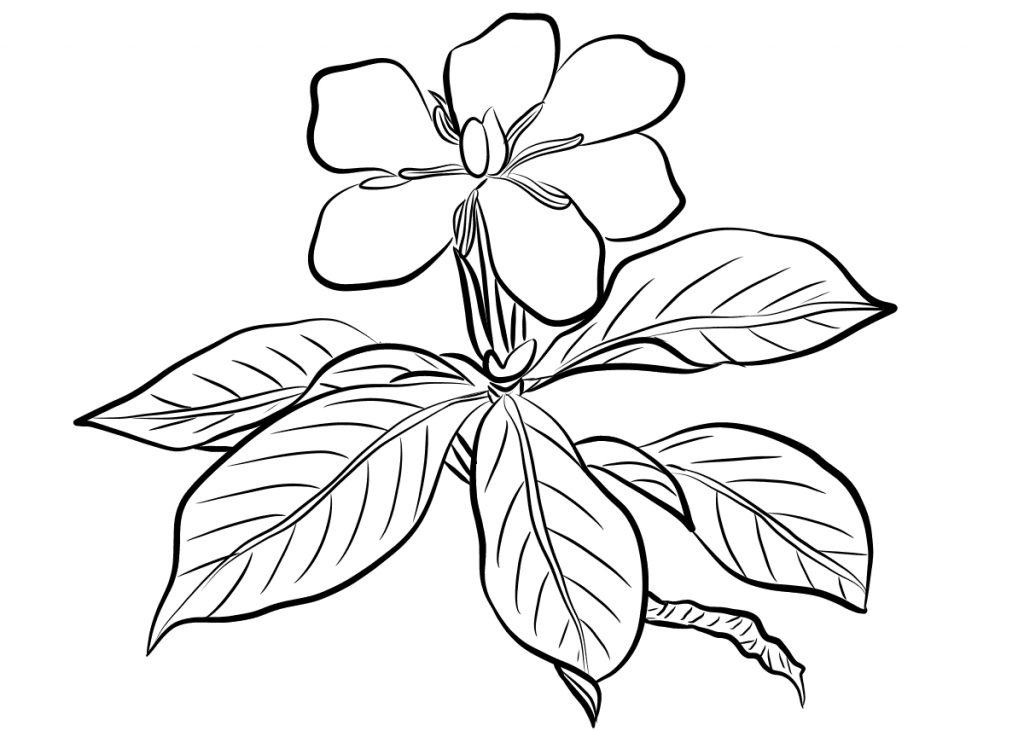 coloring pages of a flower beautiful printable flowers coloring pages of a coloring pages flower