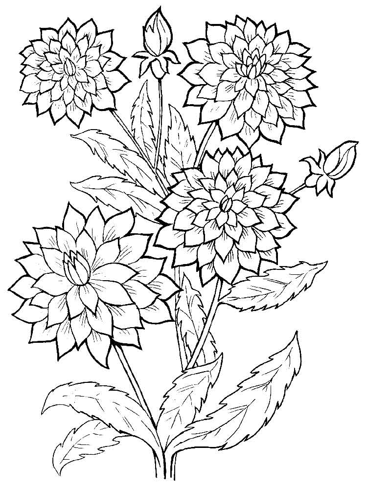coloring pages of a flower dahlia flower coloring pages download and print dahlia coloring pages flower a of
