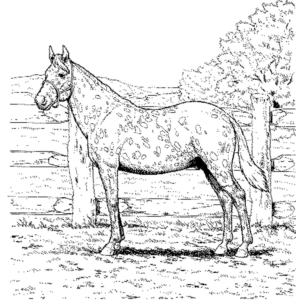 coloring pages of horses to print horse with patterns free to color for children horses horses of to coloring print pages