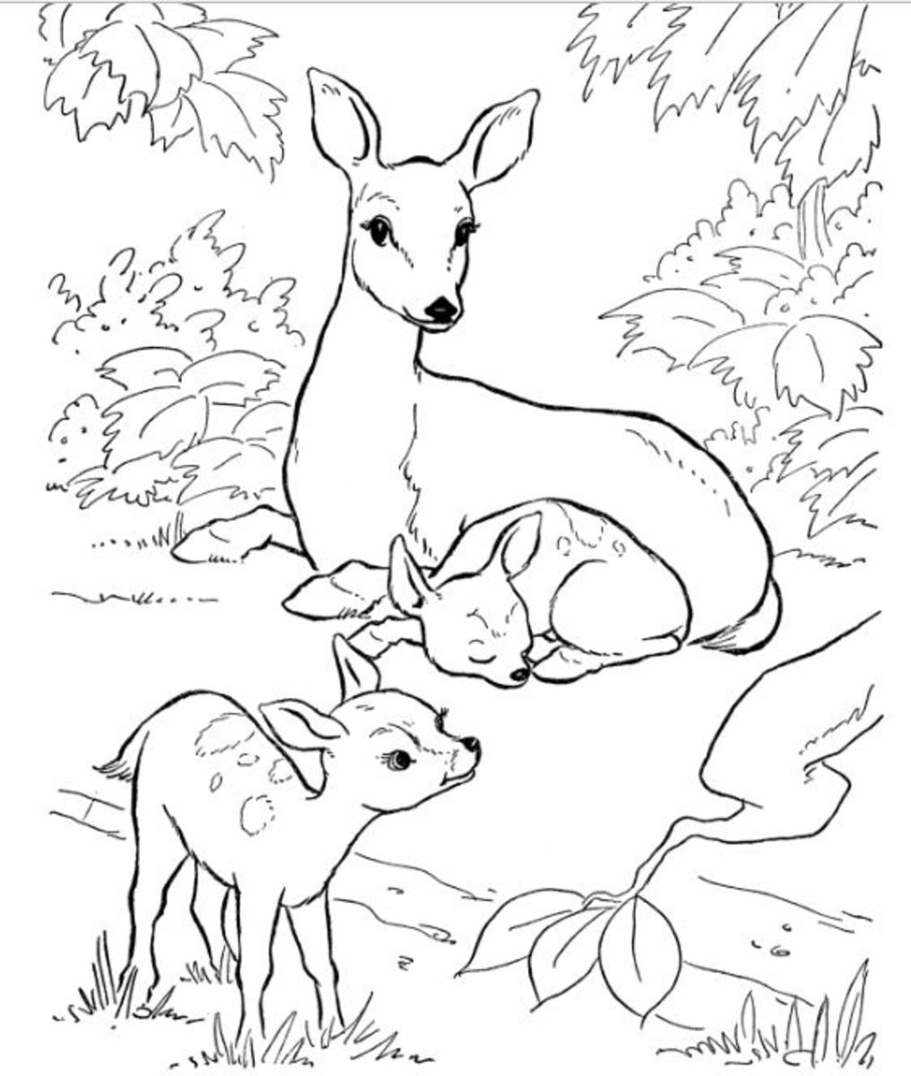 coloring pages of nature and animals 56 best nature wild animals adult colouring pages and of nature coloring animals pages