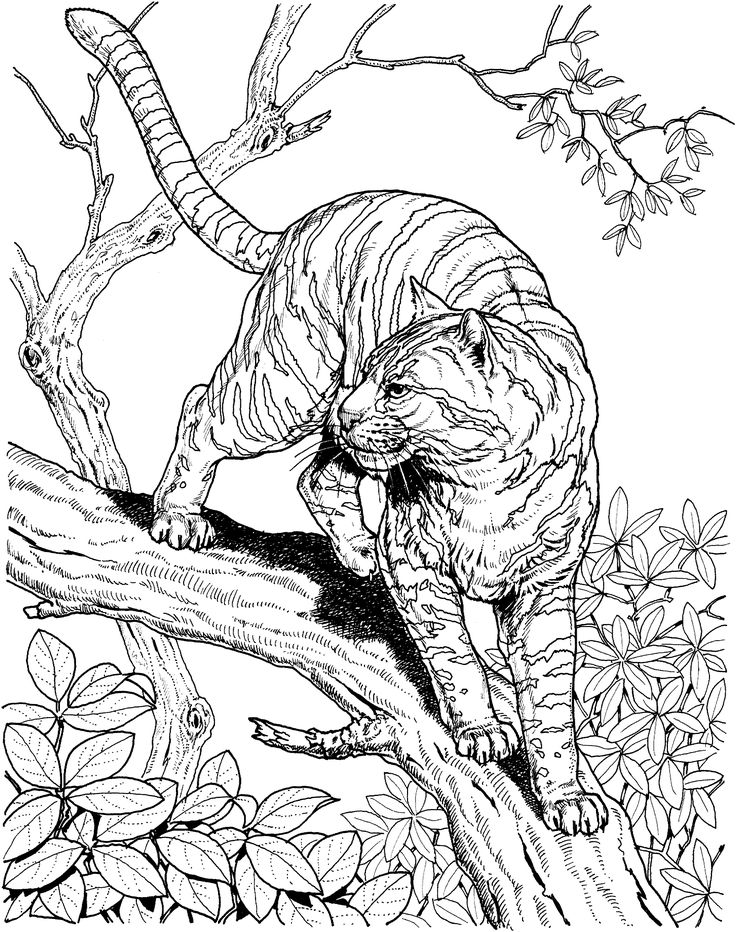 coloring pages of nature and animals backyard animals and nature coloring books free coloring and coloring nature animals of pages