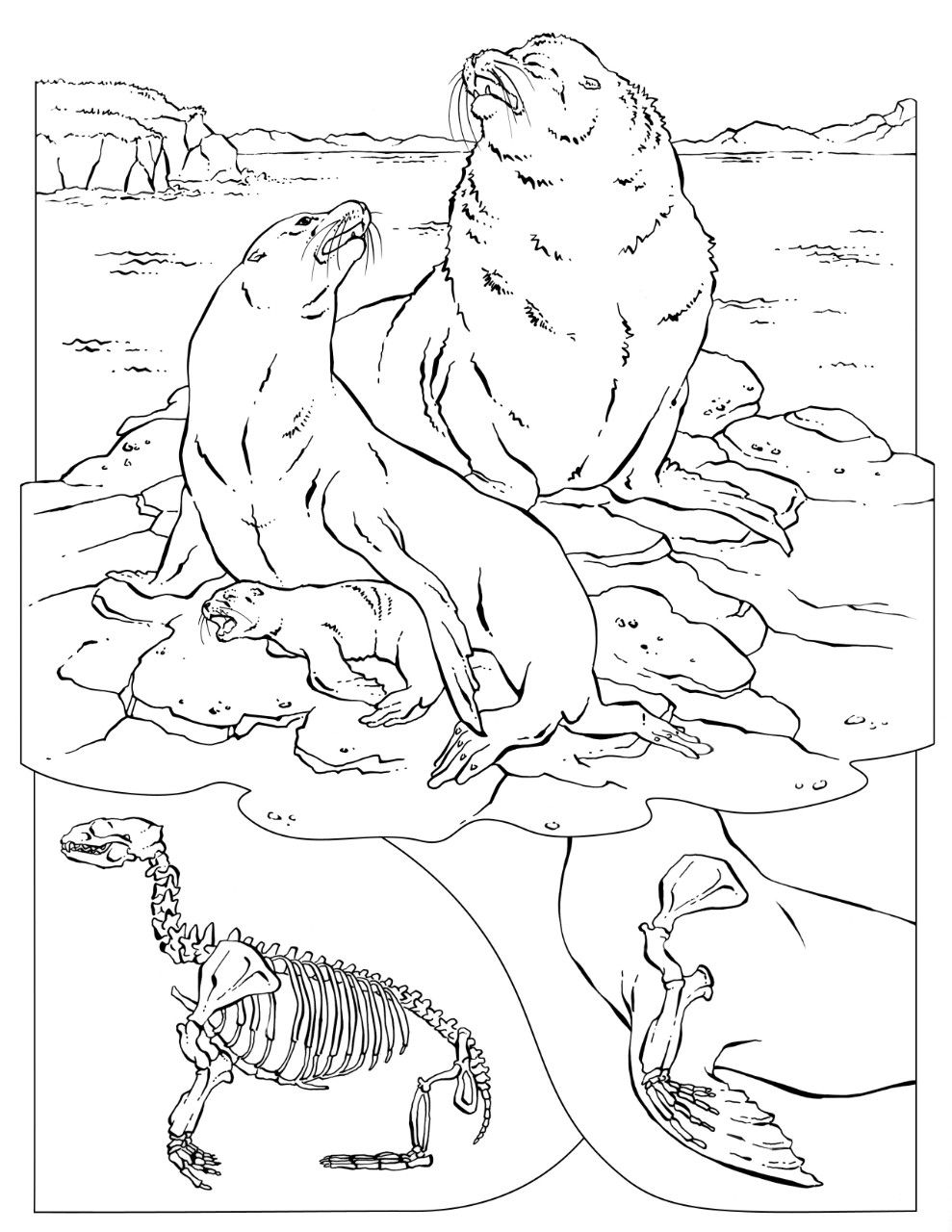 coloring pages of nature and animals backyard animals and nature coloring books free coloring nature coloring of and pages animals