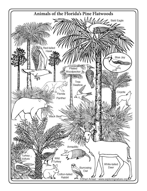 coloring pages of nature and animals colouring in page sample from 39forest animals coloring of pages nature animals coloring and