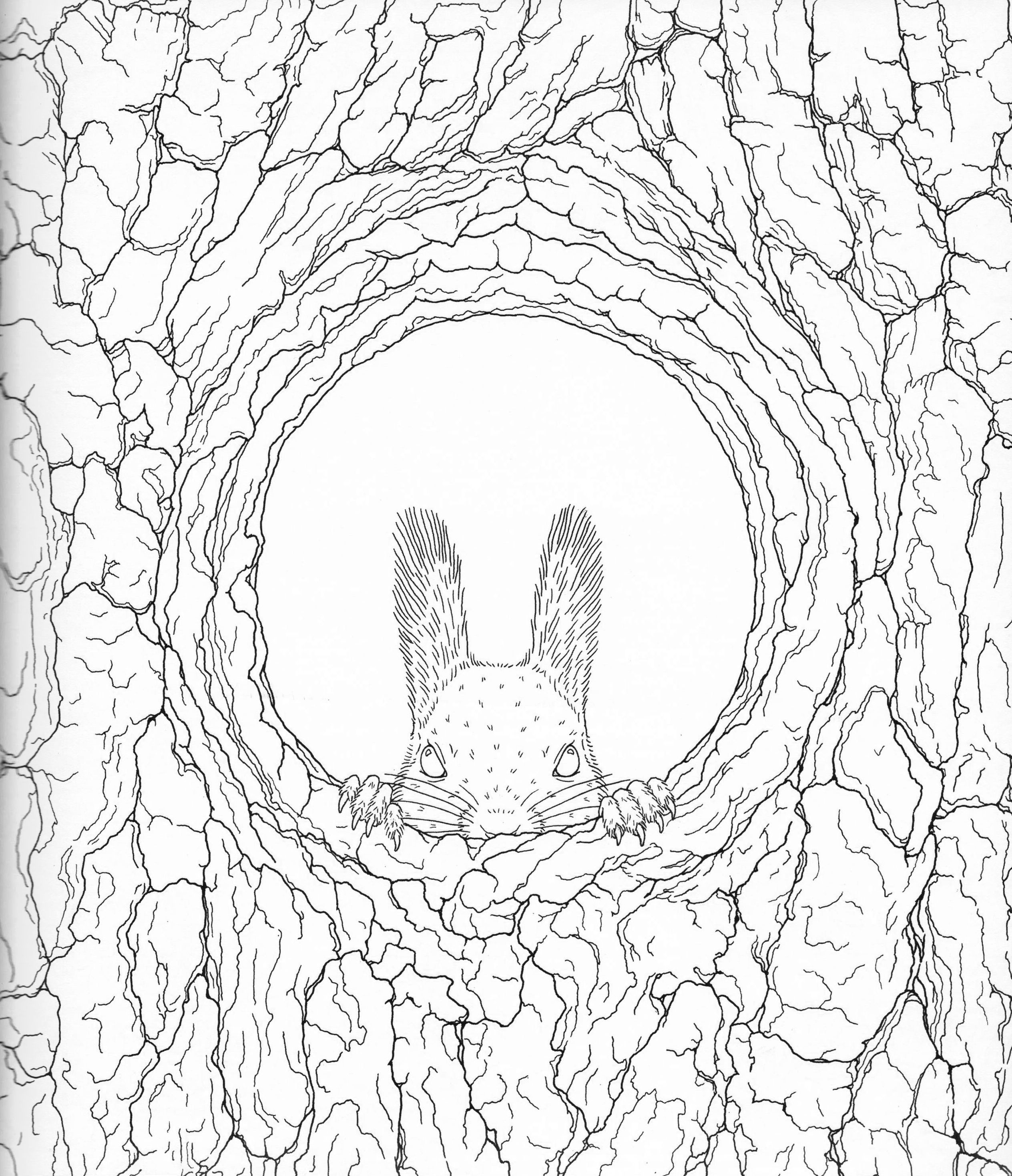 coloring pages of nature and animals eulen49328598324753245 eulen owl animal malvorlagen coloring pages animals and nature of
