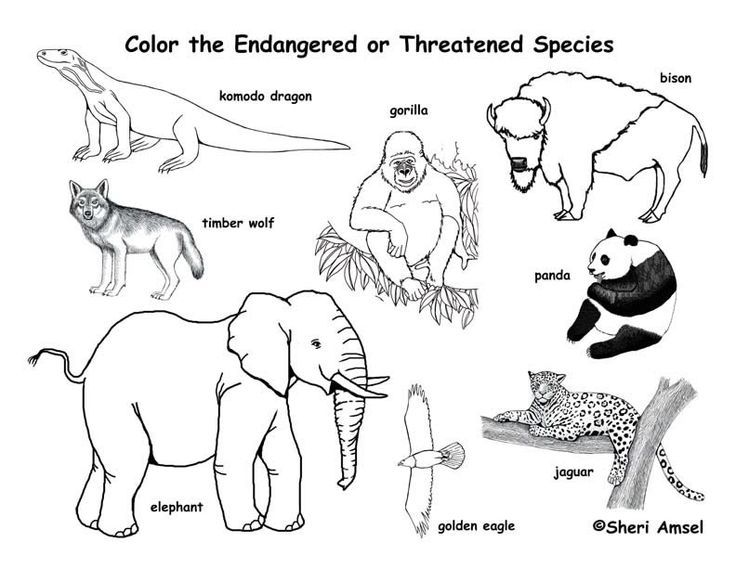 coloring pages of nature and animals florida pine flatwoods wildlife coloring nature and of animals coloring pages