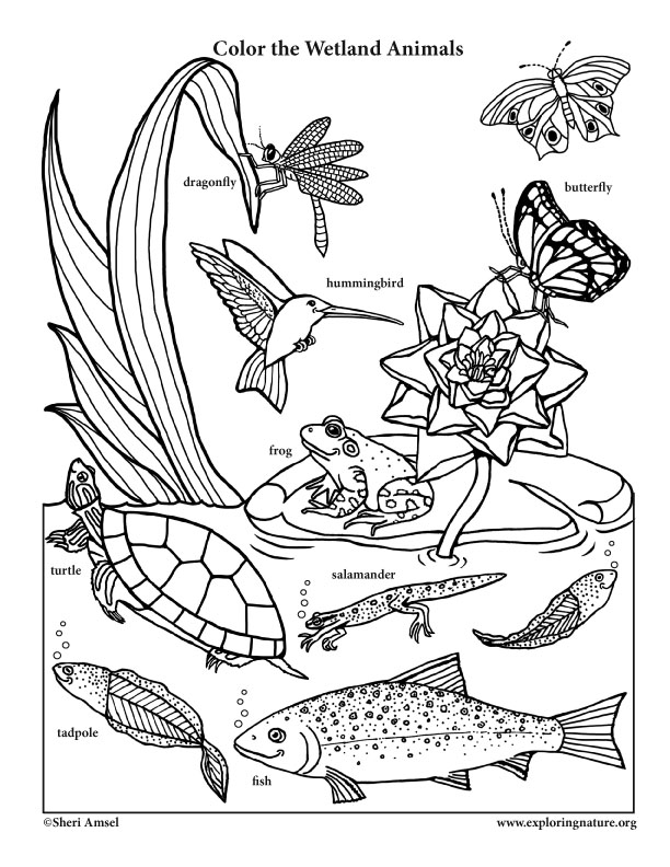 coloring pages of nature and animals gardening coloring pages for kids nature animals and of pages coloring