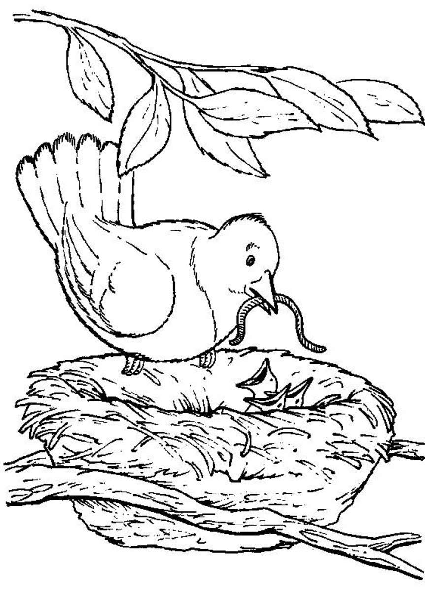 coloring pages of nature and animals mother nature coloring pages at getdrawings free download pages and nature of coloring animals
