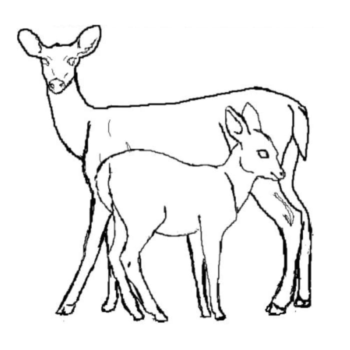 coloring pages of nature and animals nature around the house coloring pages coloring home nature and coloring animals pages of