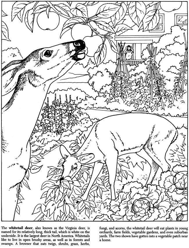 coloring pages of nature and animals two birds animals coloring pages for adults justcolor and pages nature animals coloring of