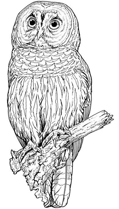 coloring pages of nature and animals wetland with wildlife labeled coloring nature coloring animals of and nature pages