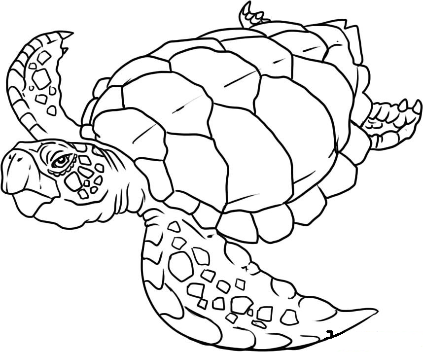 coloring pages of sea life ocean life coloring pages to download and print for free coloring life pages of sea